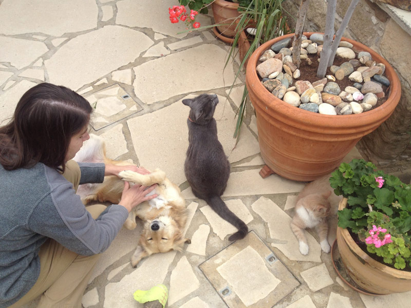 Pet sitting dogs and cats in Cyprus